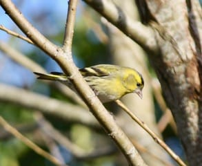 February Nature Notes at the farm