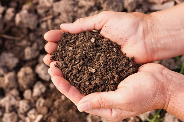 It all begins with the soil